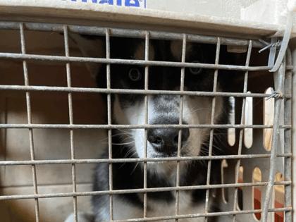 Facebook/Kabul Small Animal Rescue