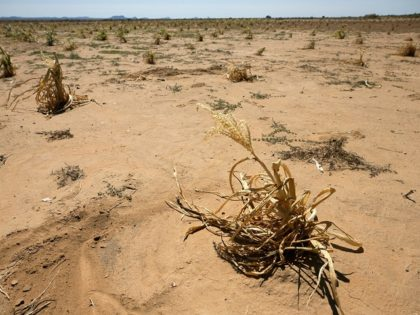 Central Arizona Farmers, Ranchers Face Worst Drought in U.S.