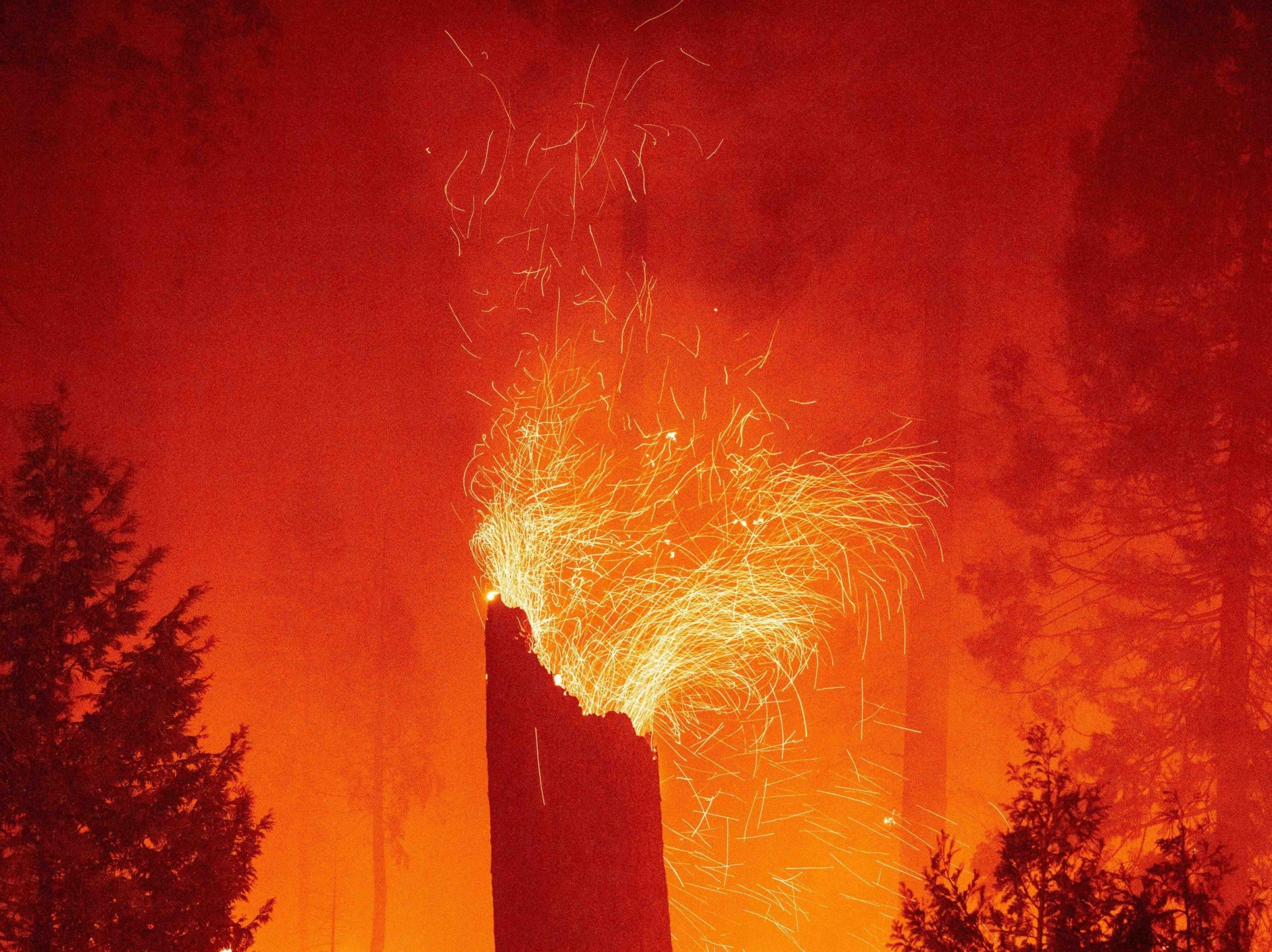 Caldor Fire (Josh Edelson / AFP / Getty)