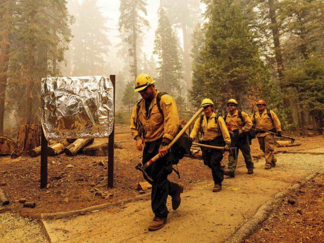 Firefighter California sequoia (Noah Berger / Associated Press)