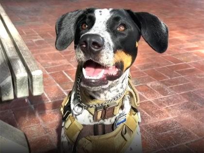 Miami-Dade police dog Dottie. Miami-Dade Police Department.
