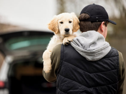 Male Criminal Stealing Or Dognapping Puppy During Health Lockdown - stock photo Male Criminal Stealing Or Dognapping Puppy During Health Lockdown