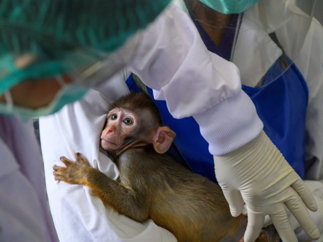 Anthony Fauci's Freakshow: NIH Conducted Psychological Torture Experiments on Monkeys
