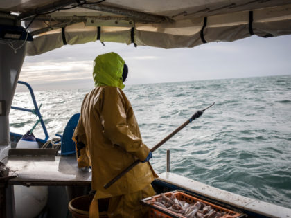 JERSEY, FRANCE - NOVEMBER 18: French skipper and fisherman Sylvain Marie fishes for lobsters and spider crabs on November 18, 2020 in the territorial waters of Jersey. France carries out nearly 30 percent of its fishing in the United Kingdom territorial waters and as such failure in the Brexit trade …