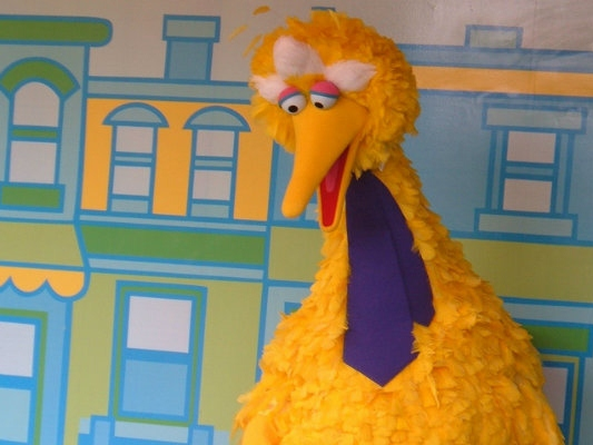 Big Bird Wings it to 'Saturday Night Live'