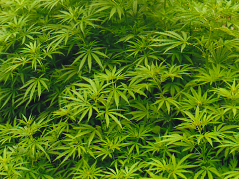 Poll: Americans Increasingly Support Pot Legalization