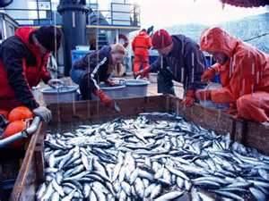 Hurricane Sandy Aid Bill Includes $150 Million for Alaskan Fisheries