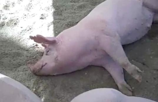 NPR's Tamara Keith Omits Pork in Sandy Bill