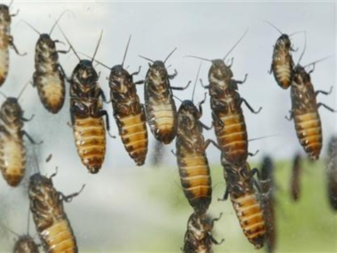 Poll: Congress Less Popular than Cockroaches, Lice, Root Canals