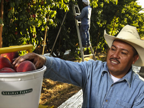 UFW Sued by Family Farming Co. for Defamation
