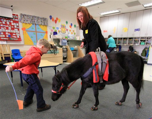 Miniature Horse Aids Alaska Boy with Special Needs