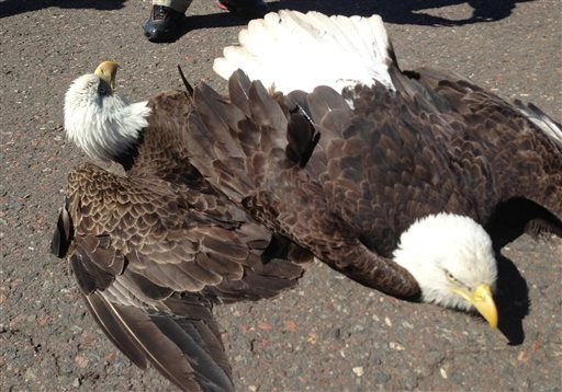 Fighting Eagles Crash Land on Minnesota Airport Runway