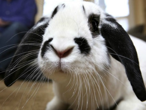 Agriculture Department to Magician: You Need a License for That Rabbit