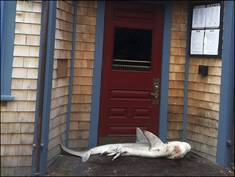 Dead shark mysteriously found at door of Nantucket pub