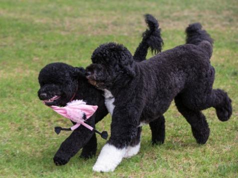 Obamas Get New Dog