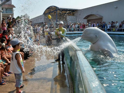 SeaWorld Slashes Worker Hours to Avoid Obamacare Fines