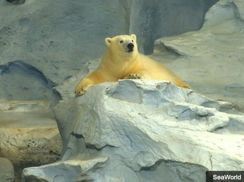 SeaWorld Polar Bear Klondike Found Dead
