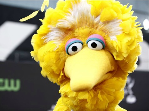 Big Bird Loses Healthcare Under Obamacare Rules