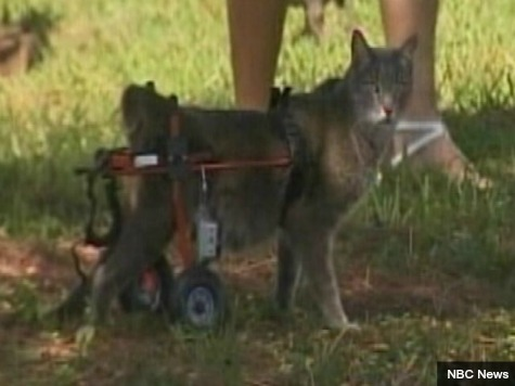 Authorities Ticket Woman over Wheelchair-Using Cat