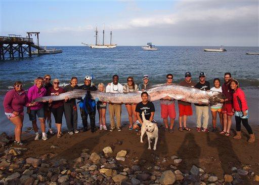 18-Foot-Long Sea Creature Found Off CA Coast