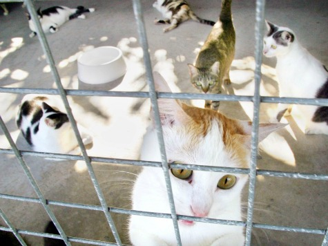 VA Animal Shelter Was Releasing Feral Cats