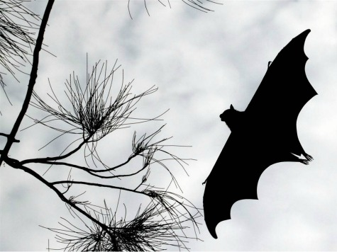 Runner Tested for Rabies after Rabid Bat Lands on Him During 5k Fun Run