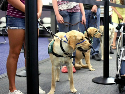 Guide Dog Dispute Cancels Flight from Philly to NY