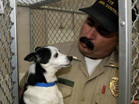San Francisco Newspaper Decline Leaves Puppies in Own Poop
