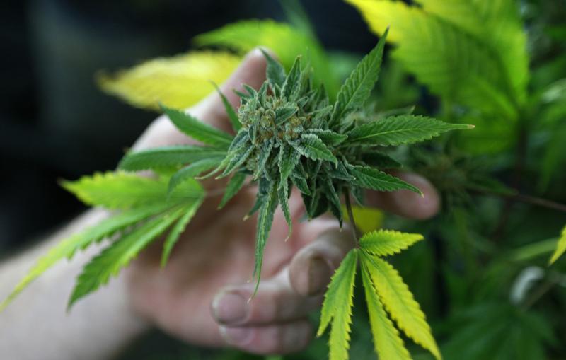 Washington, D.C., Panel Weighs Decriminalizing Marijuana
