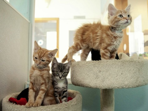 4 Kittens Pull 'Break-In' at Upstate NY Prison