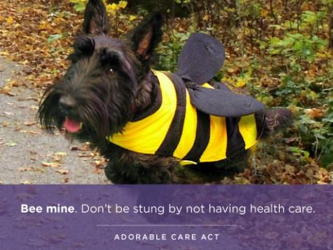 OFA Sends Pro-Obamacare Cute Animal Valentine's Cards