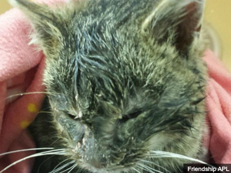 Kitten found covered in ice at the side of Ohio road