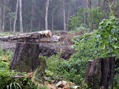Google Behind 'Deforestation' Monitoring Website
