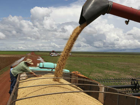 Report: Nonprofits 'Gaming the System' for Farm Subsidies that Never Reach Farms