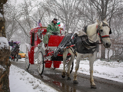 Horse Carriage Ban Proposal Turns Unions Against Bill De Blasio