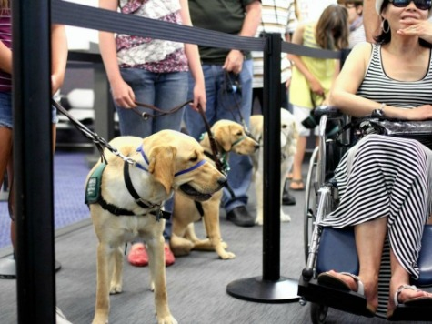 Detroit Airport Gives Services Dogs Own Bathroom