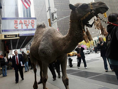 'Hump Day' Event Canceled After College Students Protest