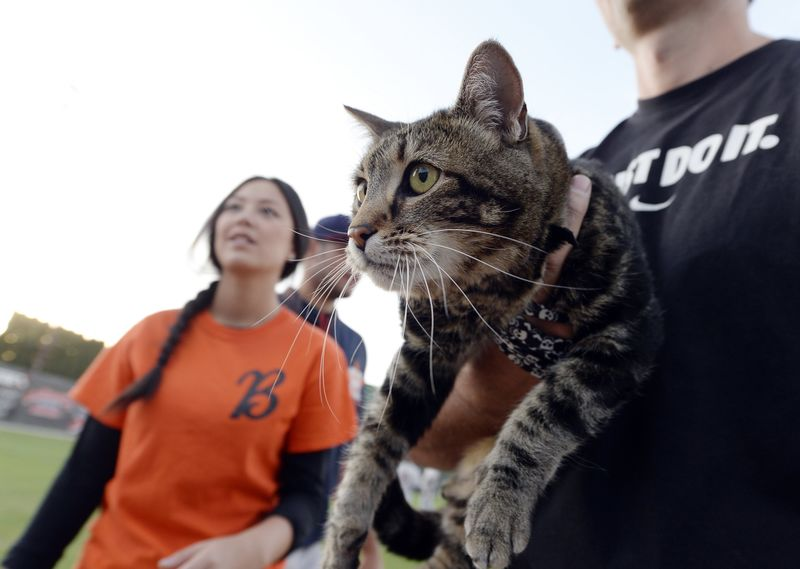Hero Cat Throws Ceremonial Ballgame Pitch