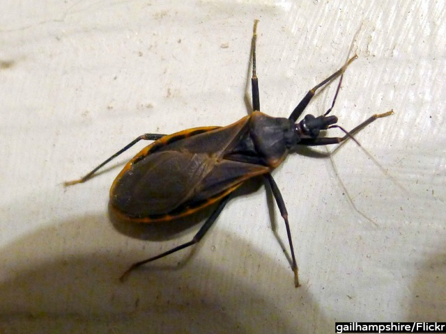 Deadly 'Kissing Bug' Has Infected 300,000 People in U.S.