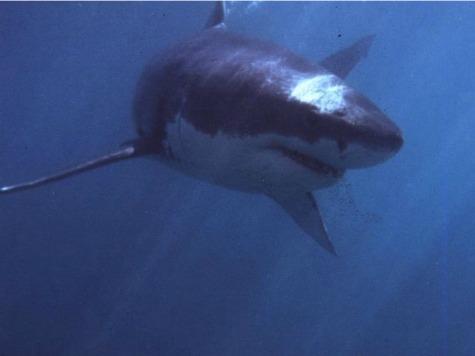 Cape Cod Shark Brochure Scares Residents