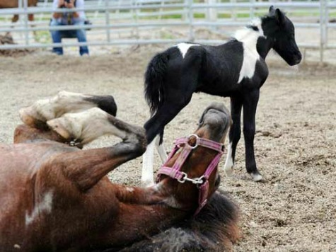 Serbian Doctor Injects Spanish Soccer Star with Horse Placenta