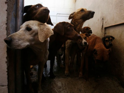 Dogs Feast On Ebola Victim Carcasses in Liberia