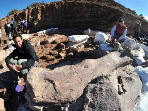 Bones Unearthed of Biggest Titanosaur Yet