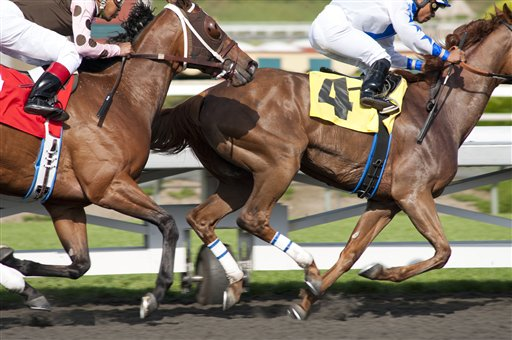 Lawsuit Alleges Horses Mistreated on HBO's 'Luck'