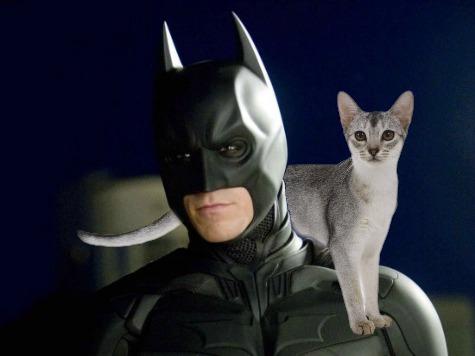 Men Dressed as Batman, Captain America Rescue Cat