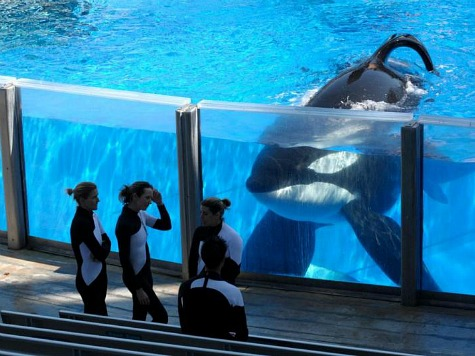 'Blackfish' Doc Prompts Heart to Cancel SeaWorld Gig