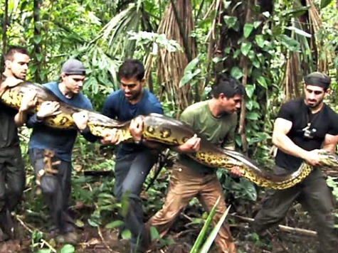 PETA Condemns Discovery Channel for 'Eaten Alive' Anaconda Special