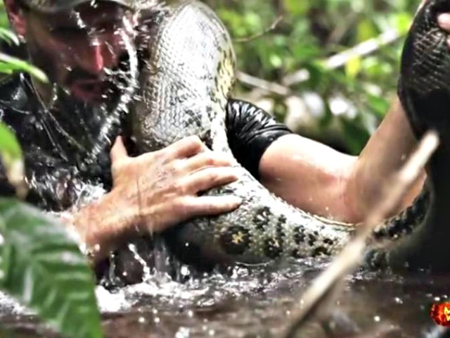 Viewers and PETA Up in Arms After Snake Refuses to Eat Man on Discovery Channel 'Eaten Alive' Special