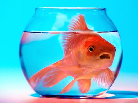 Publicist Sues FishbowlDC for Libel