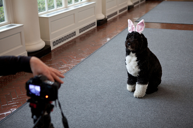 Lapdogs: White House Press Corps Asks Obama, 'Did You Beat Tiger?'